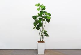tree011_s