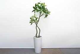 tree13_s