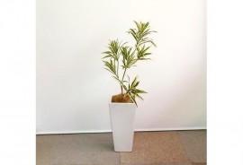 ドラセナ(ソングオブインディア)人工樹木